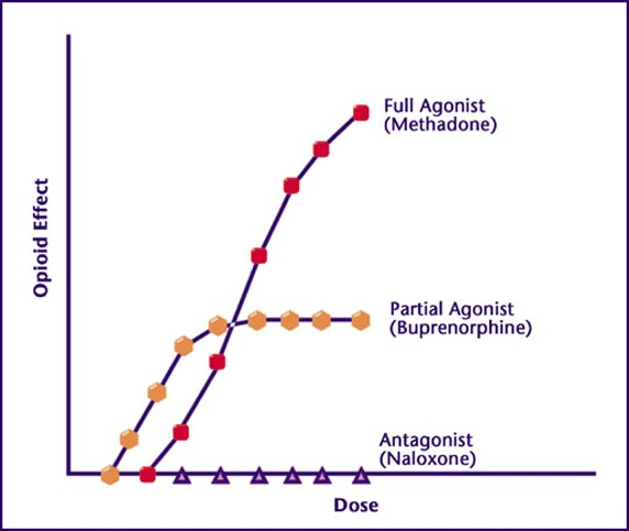 buprenorphine ceiling effect graph