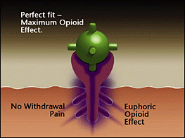 receptors occupied with strong opioid - high